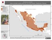 Mapa ilustrativo de Dendroica coronata (chipe coronado) usando sitios con y sin clima extremo. Distribución Potencial