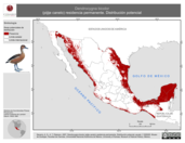 Mapa ilustrativo de Dendrocygna bicolor (pijije canelo) residencia permanente. Distribución potencial.