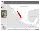 Mapa ilustrativo de Dendroica coronata (chipe coronado) verano. Distribución potencial.