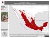 Mapa ilustrativo de Dendroica coronata (chipe coronado) invierno. Distribución potencial.