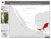 Mapa ilustrativo de Dendrocincla homochroa (trepatroncos rojizo) residencia permanente. Distribución potencial.