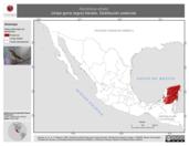 Mapa ilustrativo de Dendroica striata (chipe gorra negra) tránsito. Distribución potencial.