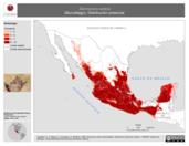 Mapa ilustrativo de Dermanura azteca (Murciélago). Distribución potencial.