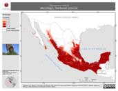 Mapa ilustrativo de Dermanura tolteca (Murciélago). Distribución potencial. La proyección citada, es exclusiva para el diseño de esta imagen.