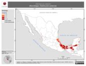 Mapa ilustrativo de Dermanura watsoni (Murciélago). Distribución potencial.