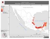 Mapa ilustrativo de Diaemus youngi (Murciélago vampiro). Distribución potencial. La proyección citada, es exclusiva para el diseño de esta imagen.