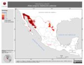Mapa ilustrativo de Dipodomys deserti (Rata canguro). Distribución potencial.