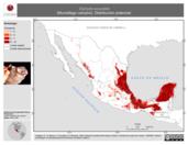 Mapa ilustrativo de Diphylla ecaudata (Murciélago vampiro). Distribución potencial.
