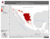 Mapa ilustrativo de Dipodomys nelsoni (Rata canguro). Distribución potencial.