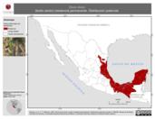 Mapa ilustrativo de Dives dives (tordo cantor) residencia permanente. Distribución potencial.