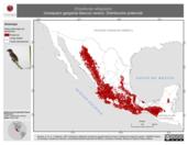 Mapa ilustrativo de Empidonax albigularis (mosquero garganta blanca) verano. Distribución potencial.