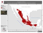 Mapa ilustrativo de Empidonax fulvifrons (mosquero pecho leonado) residencia permanente. Distribución potencial.