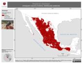 Mapa ilustrativo de Empidonax oberholseri (mosquero oscuro) invierno. Distribución potencial.