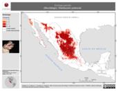 Mapa ilustrativo de Eumops perotis (Murciélago). Distribución potencial.