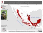 Mapa ilustrativo de Falco femoralis (halcón fajado) residencia permanente. Distribución potencial.