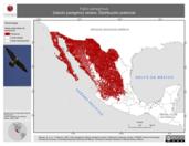 Mapa ilustrativo de Falco peregrinus (halcón peregrino) verano. Distribución potencial.