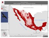 Mapa ilustrativo de Falco peregrinus (halcón peregrino) invierno. Distribución potencial.