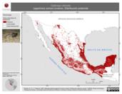 Mapa ilustrativo de Gallinago delicata (agachona común) invierno. Distribución potencial.