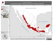 Mapa ilustrativo de Geococcyx velox (correcaminos tropical) residencia permanente. Distribución potencial.