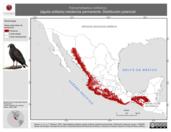 Mapa ilustrativo de Harpyhaliaetus solitarius (águila solitaria) residencia permanente. Distribución potencial.