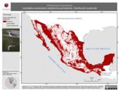 Mapa ilustrativo de Himantopus mexicanus (candelero americano) residencia permanente. Distribución potencial.