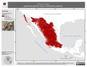 Mapa ilustrativo de Hirundo rustica (golondrina tijereta) verano. Distribución potencial.