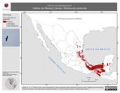 Mapa ilustrativo de Ictinia mississippiensis (milano de Misisipi) tránsito. Distribución potencial.