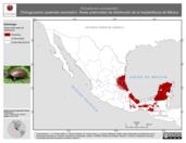 Mapa ilustrativo de Kinosternon scorpioides (Tortuga pecho quebrado escorpión). Área de distribución potencial. La proyección citada, es exclusiva para el diseño de esta imagen.