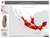 Mapa ilustrativo de Lasiurus intermedius (Murciélago). Distribución potencial. La proyección citada, es exclusiva para el diseño de esta imagen.