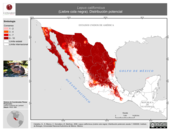 Mapa ilustrativo de Lepus californicus (Liebre cola negra). Distribución potencial.