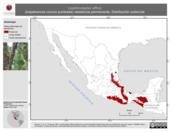 Mapa ilustrativo de Lepidocolaptes affinis (trepatroncos corona punteada) residencia permanente. Distribución potencial.