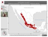 Mapa ilustrativo de Lepidocolaptes leucogaster (trepatroncos escarchado) residencia permanente. Distribución potencial.