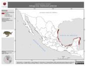 Mapa ilustrativo de Lepidochelys kempii (tortuga lora). Distribución potencial. La proyección citada, es exclusiva para el diseño de esta imagen.