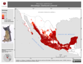 Mapa ilustrativo de Macrotus waterhousii (Murciélago). Distribución potencial.