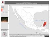 Mapa ilustrativo de Mazama pandora (Venado temazate café). Distribución potencial.