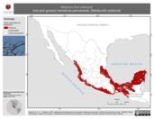 Mapa ilustrativo de Megarynchus pitangua (luis pico grueso) residencia permanente. Distribución potencial.