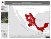 Mapa ilustrativo de Melanerpes aurifrons (carpintero cheje) residencia permanente. Distribución potencial.