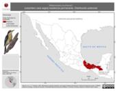 Mapa ilustrativo de Melanerpes pucherani (carpintero cara negra) residencia permanente. Distribución potencial.