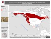 Mapa ilustrativo de Melospiza melodia (gorrión cantor) en época de anidación del Hemisferio Norte. Distribución potencial.