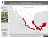 Mapa ilustrativo de Micrastur semitorquatus (halcón-selvático de collar) residencia permanente. Distribución potencial.