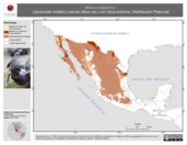 Mapa ilustrativo de Mimus polyglottos (centzontle norteño) usando sitios con y sin clima extremo. Distribución Potencial