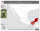 Mapa ilustrativo de Mimus gilvus (centzontle tropical) residencia permanente. Distribución potencial.