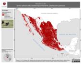 Mapa ilustrativo de Molothrus ater (tordo cabeza café) residencia permanente. Distribución potencial.