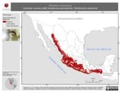 Mapa ilustrativo de Momotus mexicanus (momoto corona café) residencia permanente. Distribución potencial.
