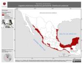 Mapa ilustrativo de Mycteria americana (cigüeña americana) residencia permanente. Distribución potencial.