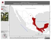 Mapa ilustrativo de Myiarchus crinitus (papamoscas viajero) tránsito. Distribución potencial.