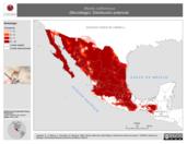 Mapa ilustrativo de Myotis californicus (Murciélago). Distribución potencial.