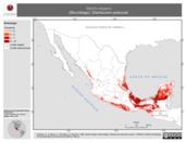 Mapa ilustrativo de Myotis elegans (Murciélago). Distribución potencial.