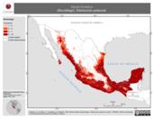 Mapa ilustrativo de Myotis fortidens (Murciélago). Distribución potencial.