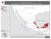 Mapa ilustrativo de Nomonyx dominicus (pato enmascarado) residencia permanente. Distribución potencial.
